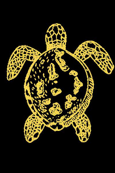 Copy of Turtle Designs (1)