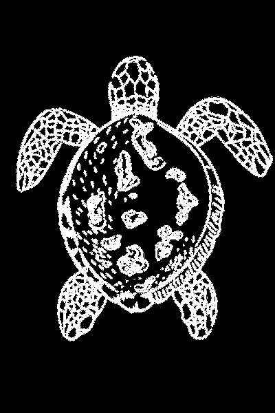 Copy of Turtle Designs (3)