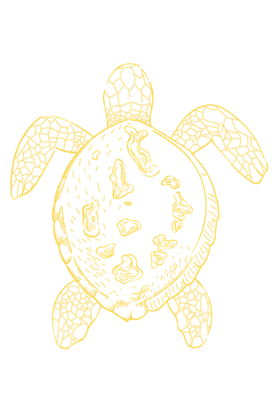4 Turtle opposite direction